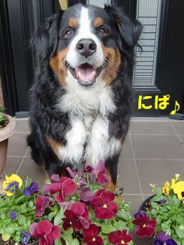 お花とニパっ♪
