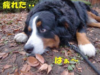 なんか色々疲れたの。