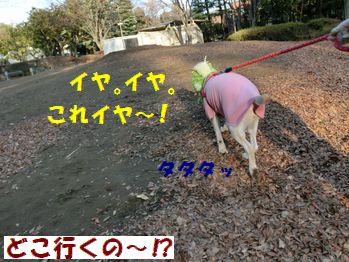 どこ行くのマロンちゃん~!!