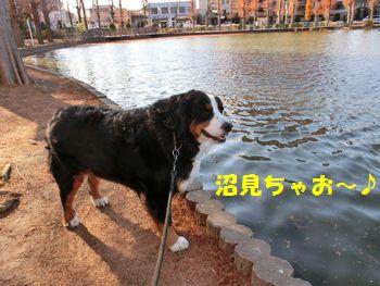 沼をよ~く見ないとね~!