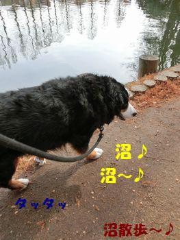 沼散歩~ったら沼散歩~!