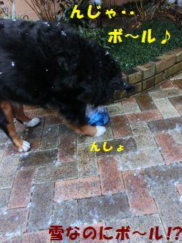 じゃ、ボールで遊ぼ。