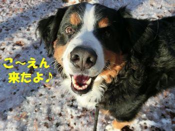 こうえんにきたよ~!雪でもきたよ~!