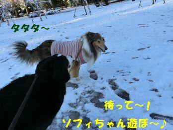 ソフィちゃん~!雪だよ!!