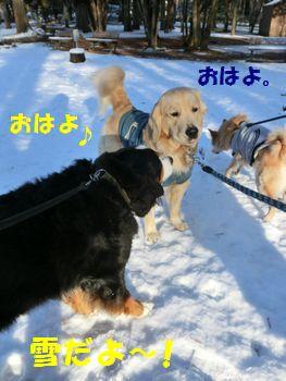 ベリーちゃんも夢ちゃんもオハヨ~!