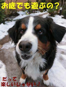 お散歩で雪とたわむれたよ?