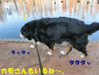 沼の周りを歩くよ~!