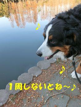 頑張って歩くよ~!!
