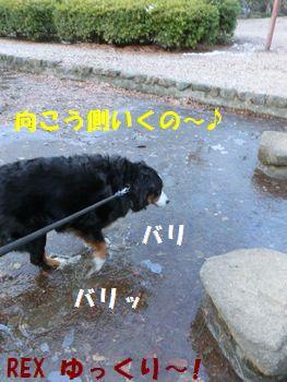 氷踏んじゃえ~!