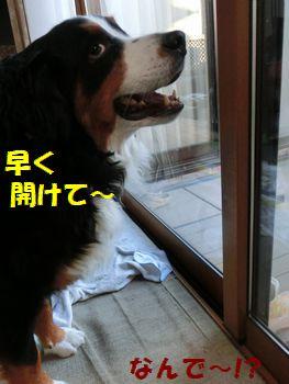 も~いから開けようよ~!