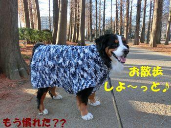取りあえずお散歩~!