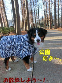 セーター散歩だよ~!