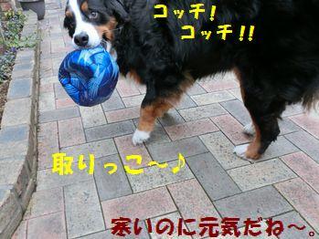 ボールで遊ぼう~!!