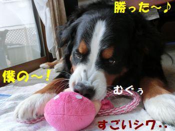 夢中になっちゃうの~!