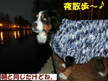 夜散歩だよ~!