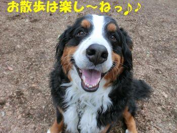 お散歩たのし~!ベリーちゃん好き~!!