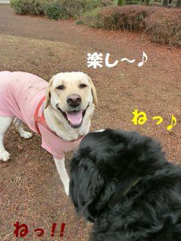 楽しいね~!マロンちゃん最高!