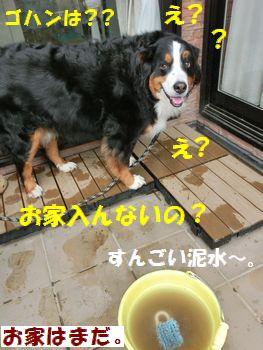 足洗ったらお家でしょ?