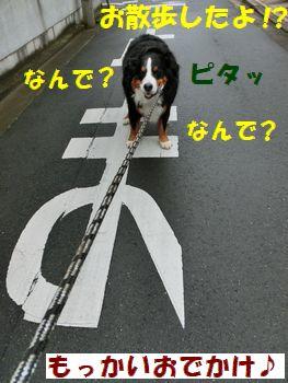 だってお散歩したもん。