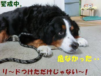 僕の死守!!