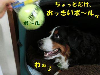 わぁ~中途半端におっきいボール~!!