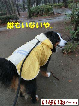 お友達雨だからいないね~。