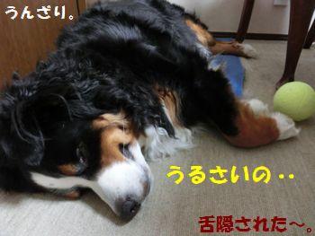 寝てるの邪魔すんだから~!!