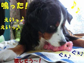 嬉しい~!!鳴ったの~!!