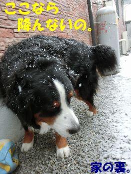 ここなら雪が降ってこない!