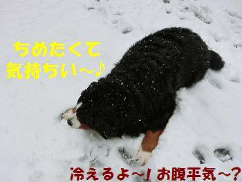 雪で寝ると気持い~♪