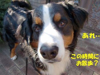 お散歩行くの~!?