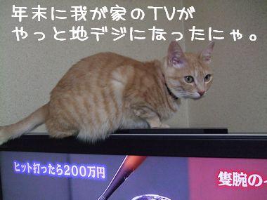 DSCF3117_20100105202222.jpg