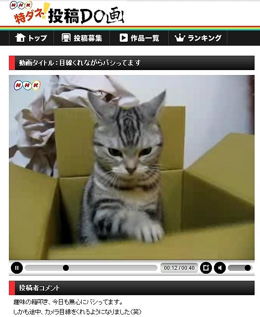 Bashi3.jpg