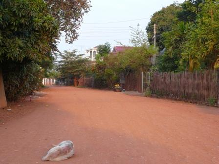 路上で寝ている犬