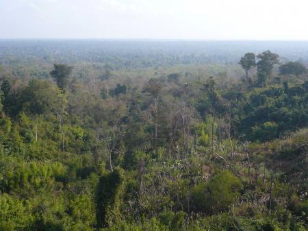 眼下の森林