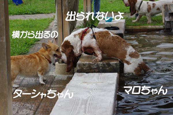 マロちゃんとターシャちゃん