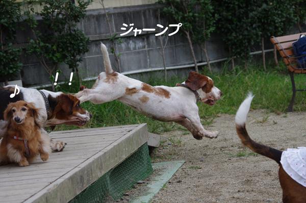 ナットちゃんジャンプ