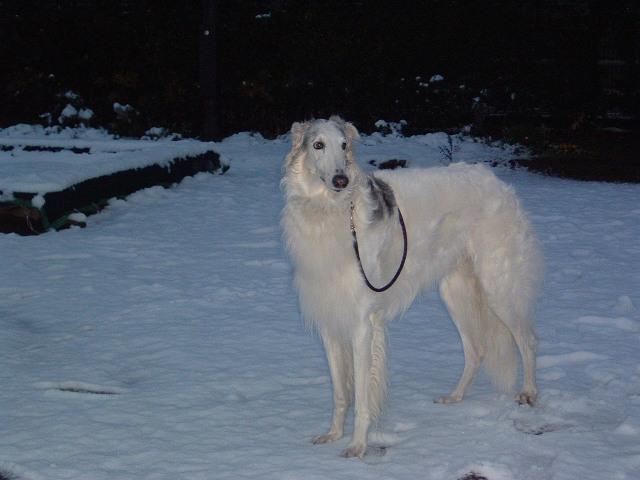 雪の朝散歩 (5)s