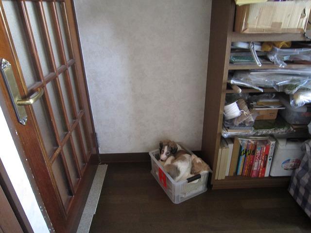 ベビー43日目 (4)s