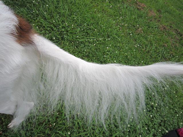 テイラーの尻尾 (3)s