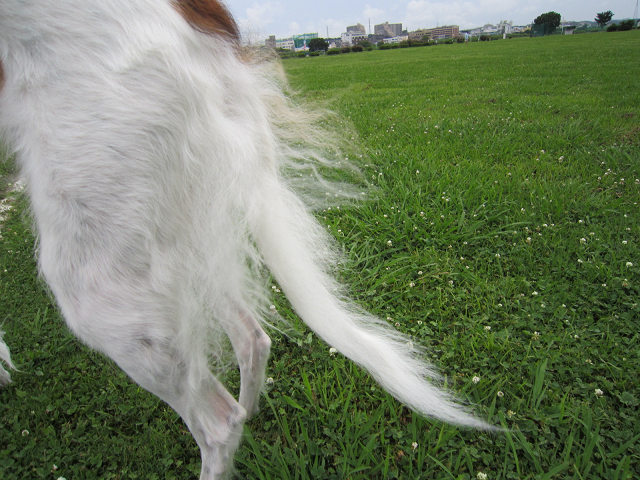 テイラーの尻尾 (2)s