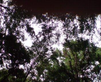 20100809140356.jpg