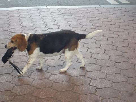 カバン銜える犬