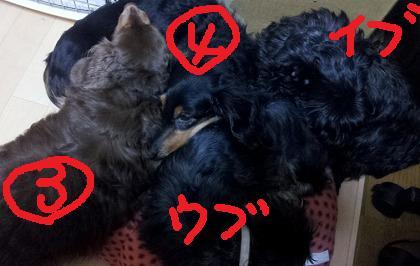 2012-01-04_03_25_13.jpg