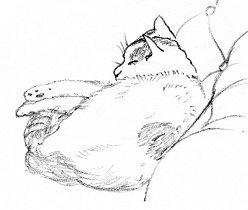 chobi sketch2