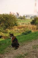 土手の上の猫