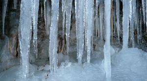 梨木の氷柱3