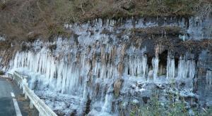 梨木の氷柱1