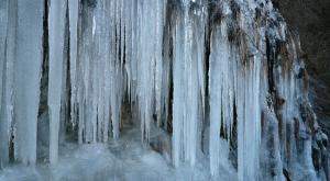 梨木の氷柱4
