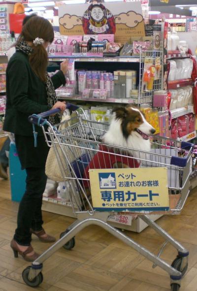 買い物5雋キ縺・黄2009_0920berry0022_convert_20091014092930